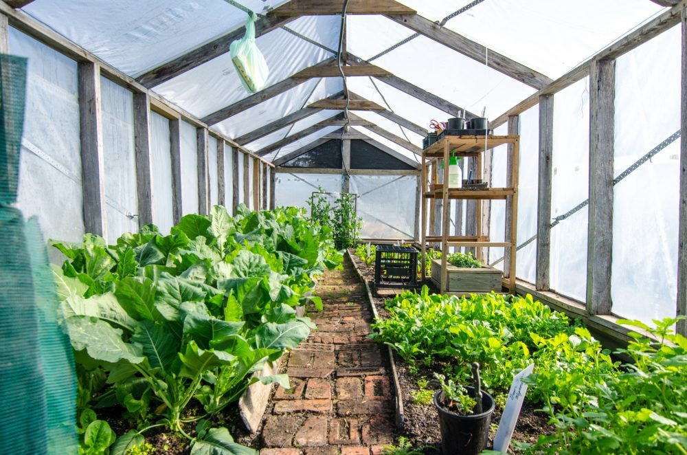 Horticulture Therapy Thriving at Missiondale